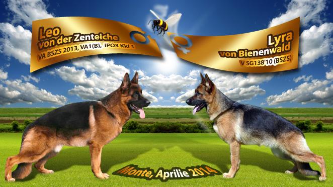 Monta ciobanesc german – Leo von der Zenteiche – Lyra von Bienenwald