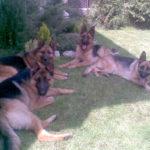 Rocco, Ria mare, Ria mica si Julia von Bienenwald