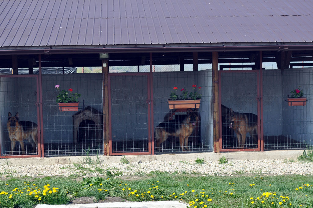 Pensiunea canina von Bienenwald